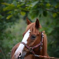 Putování za zvířátky 05-09-2015